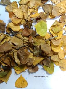 corona-otoño0