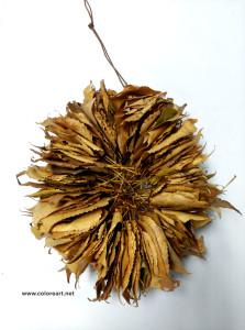 corona-otoño4